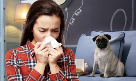 Can Pet Allergy Sufferers Improve Their Home's Air Quality While Still Owning Pets?
