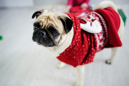 Winter Dog Coats: Keeping Your Dog Warm in Colder Temperatures