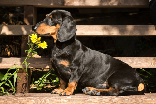 Making Your Dog's Coat Shine: Are Raw Eggs Safe to Feed Your Dog?